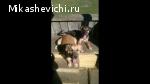 Пропали 2 собаки